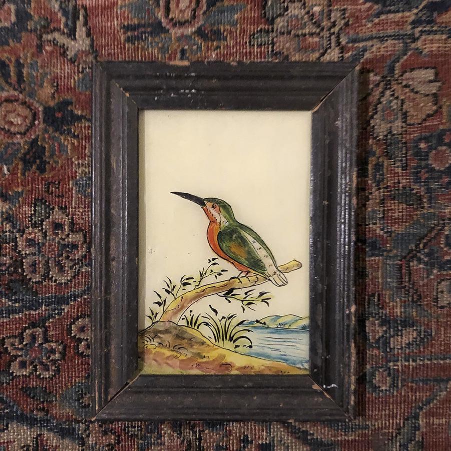 Kingfisher Dark Frame-S