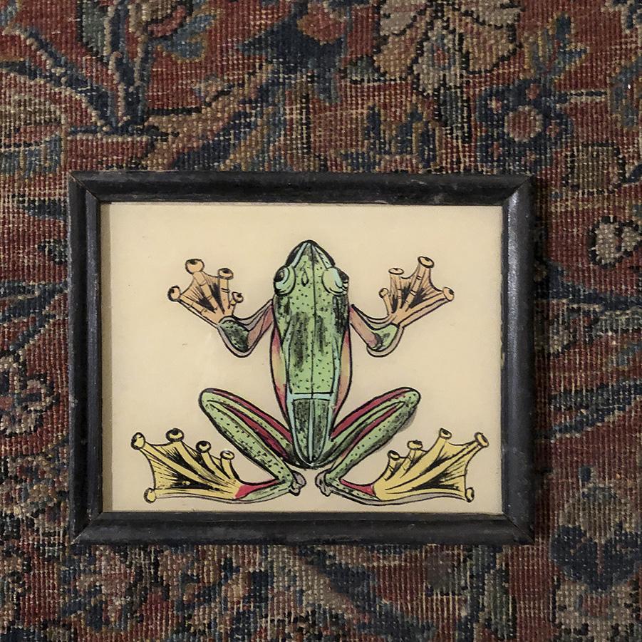 Frog-S