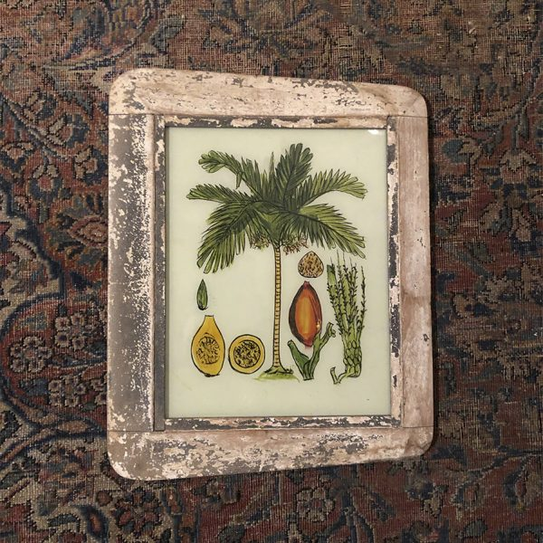 Palmtree and nuts